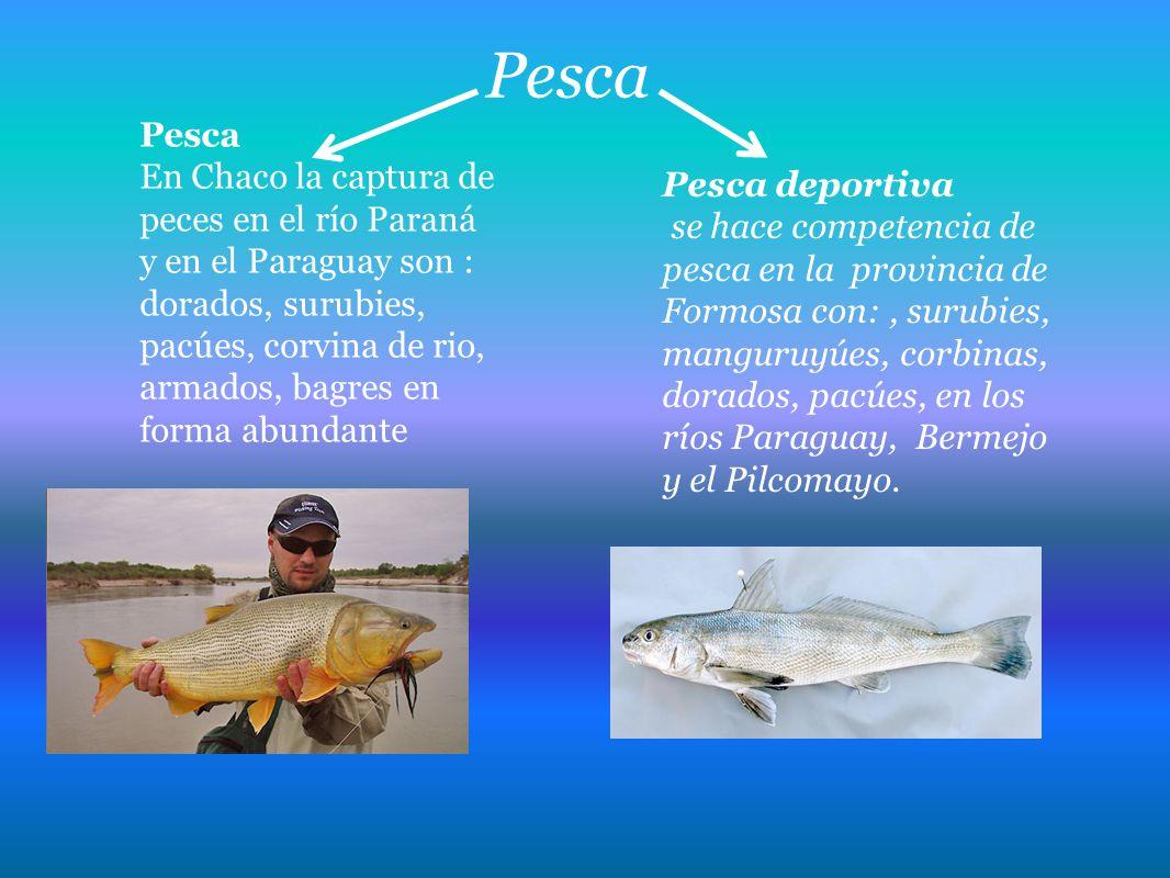 Pesca Pesca.