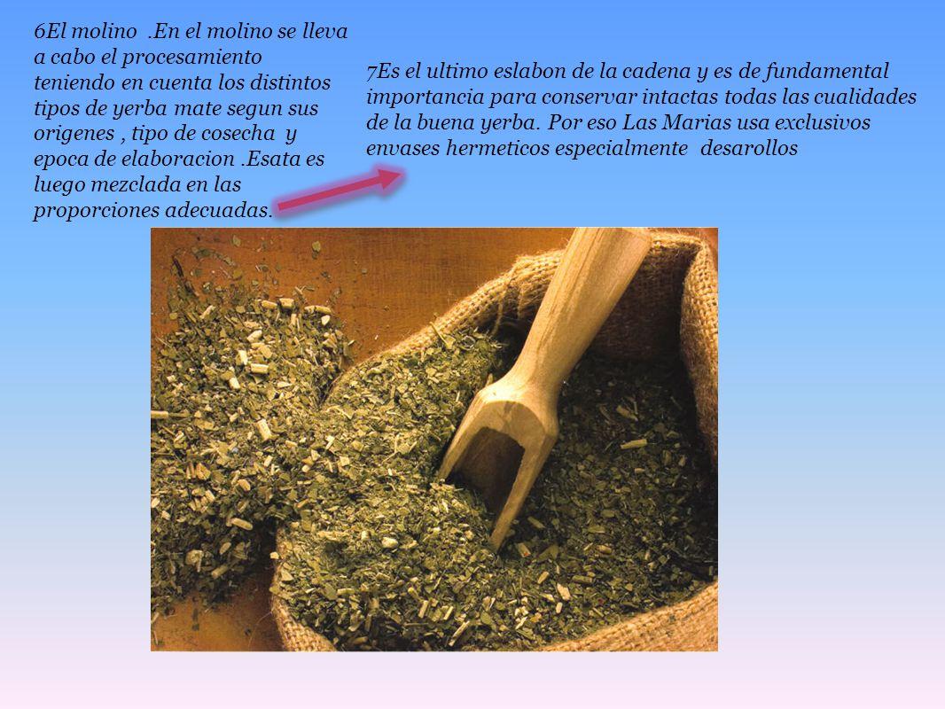 6El molino .En el molino se lleva a cabo el procesamiento teniendo en cuenta los distintos tipos de yerba mate segun sus origenes , tipo de cosecha y epoca de elaboracion .Esata es luego mezclada en las proporciones adecuadas.