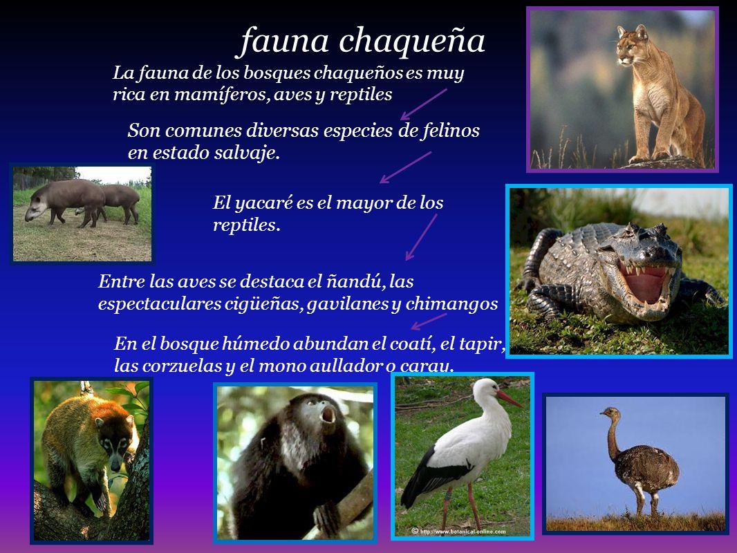 fauna chaqueña La fauna de los bosques chaqueños es muy rica en mamíferos, aves y reptiles.