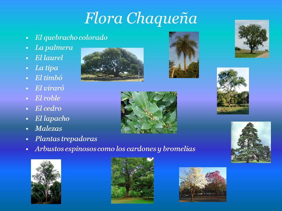 Flora Chaqueña El quebracho colorado La palmera El laurel La tipa
