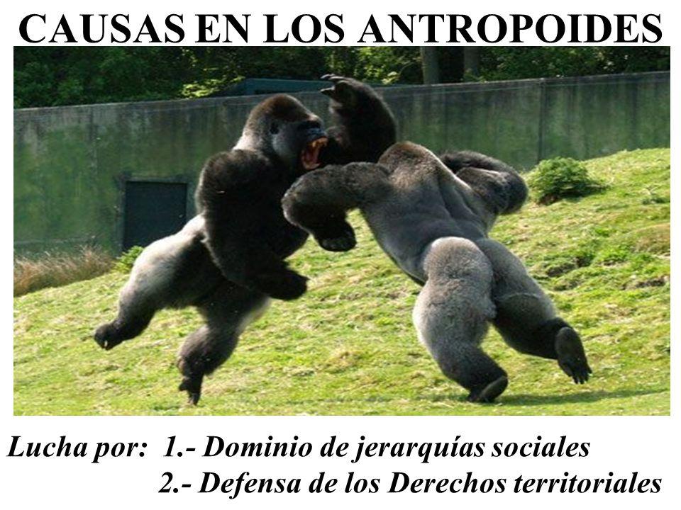 CAUSAS EN LOS ANTROPOIDES