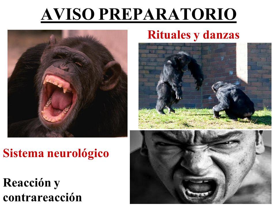 AVISO PREPARATORIO Rituales y danzas Sistema neurológico Reacción y