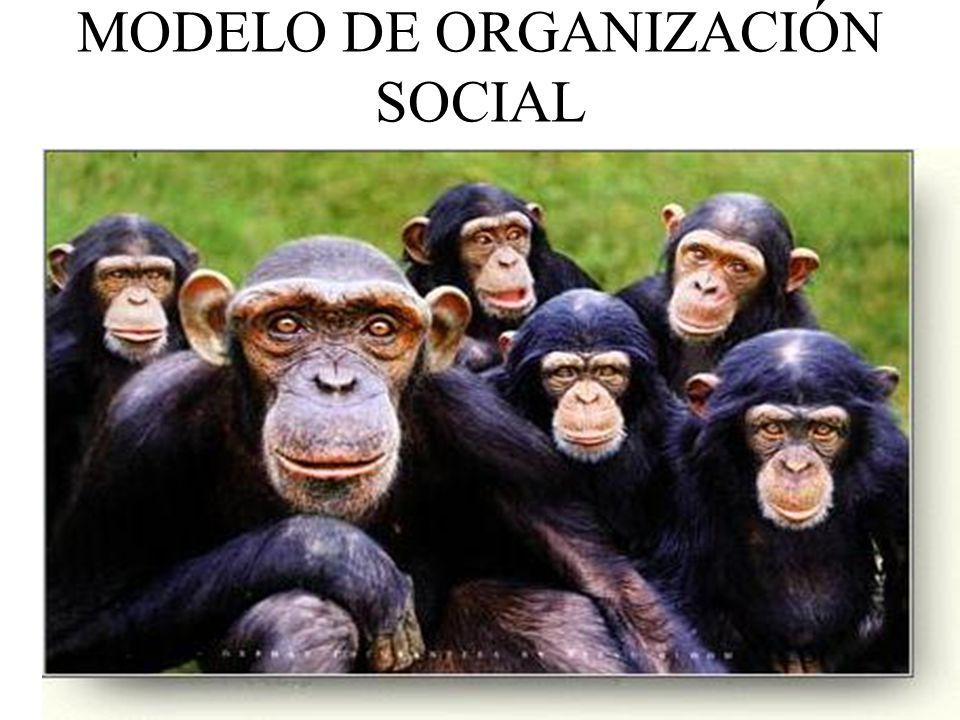 MODELO DE ORGANIZACIÓN SOCIAL