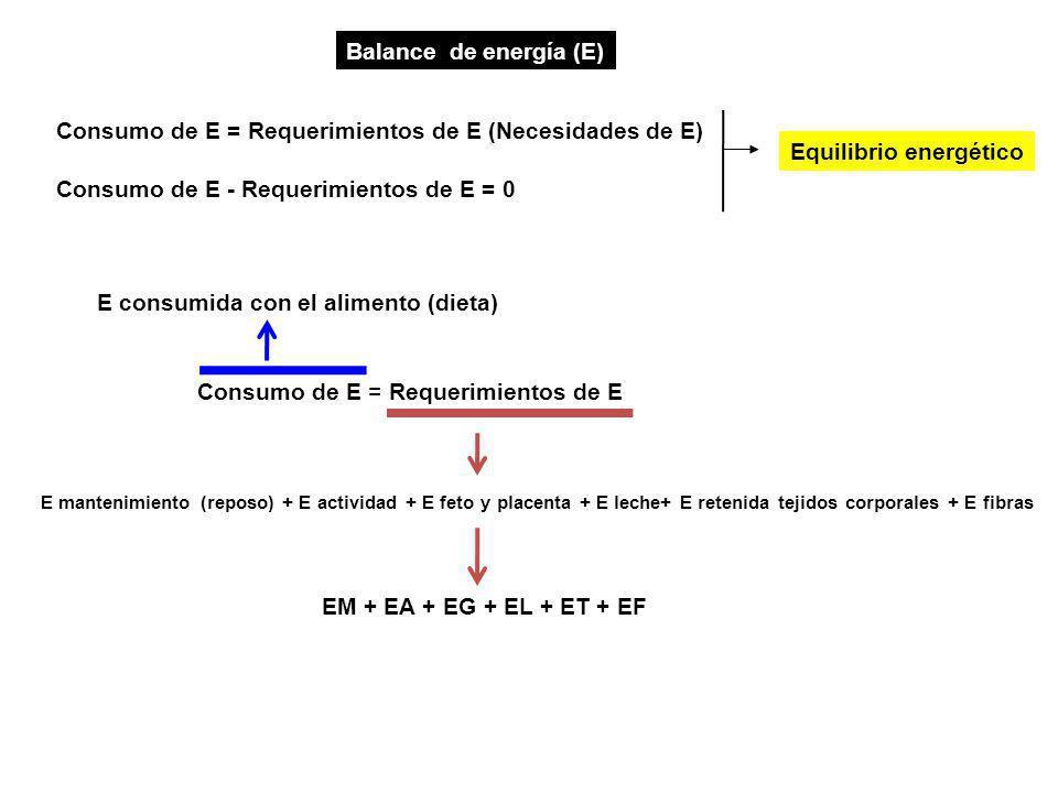 Consumo de E = Requerimientos de E (Necesidades de E)