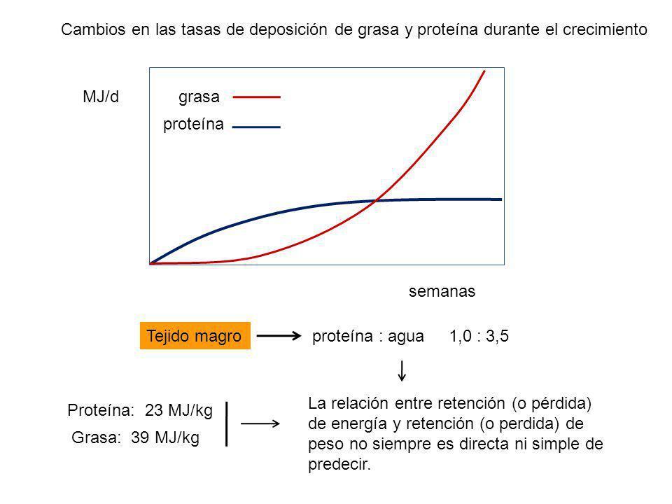 Cambios en las tasas de deposición de grasa y proteína durante el crecimiento