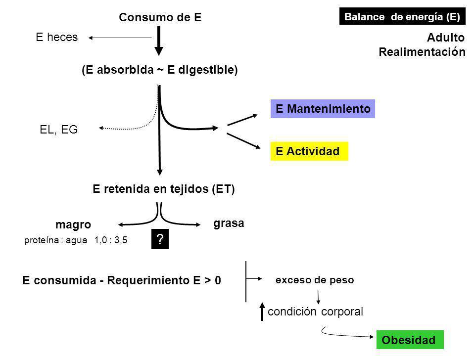 Consumo de E E heces Adulto Realimentación