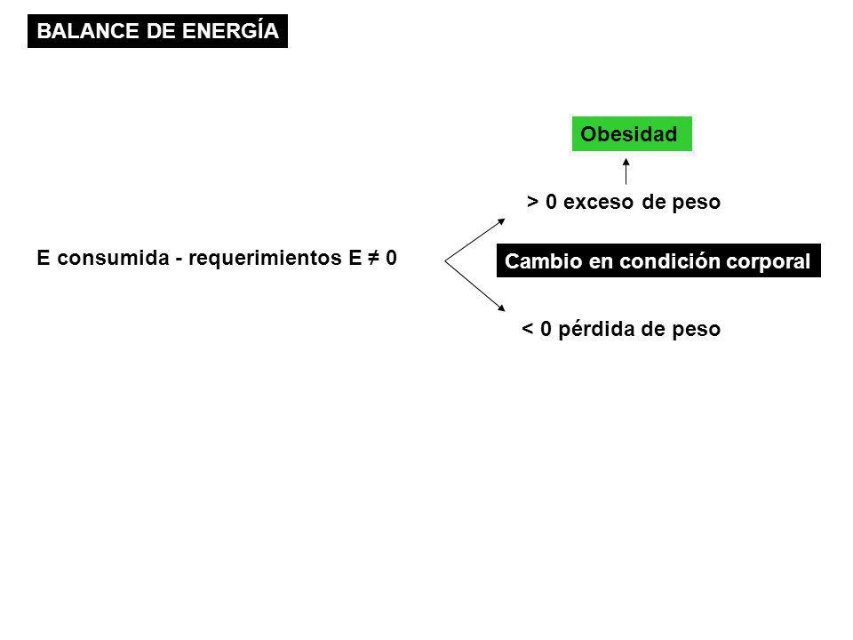 BALANCE DE ENERGÍA Obesidad. > 0 exceso de peso. E consumida - requerimientos E ≠ 0. Cambio en condición corporal.