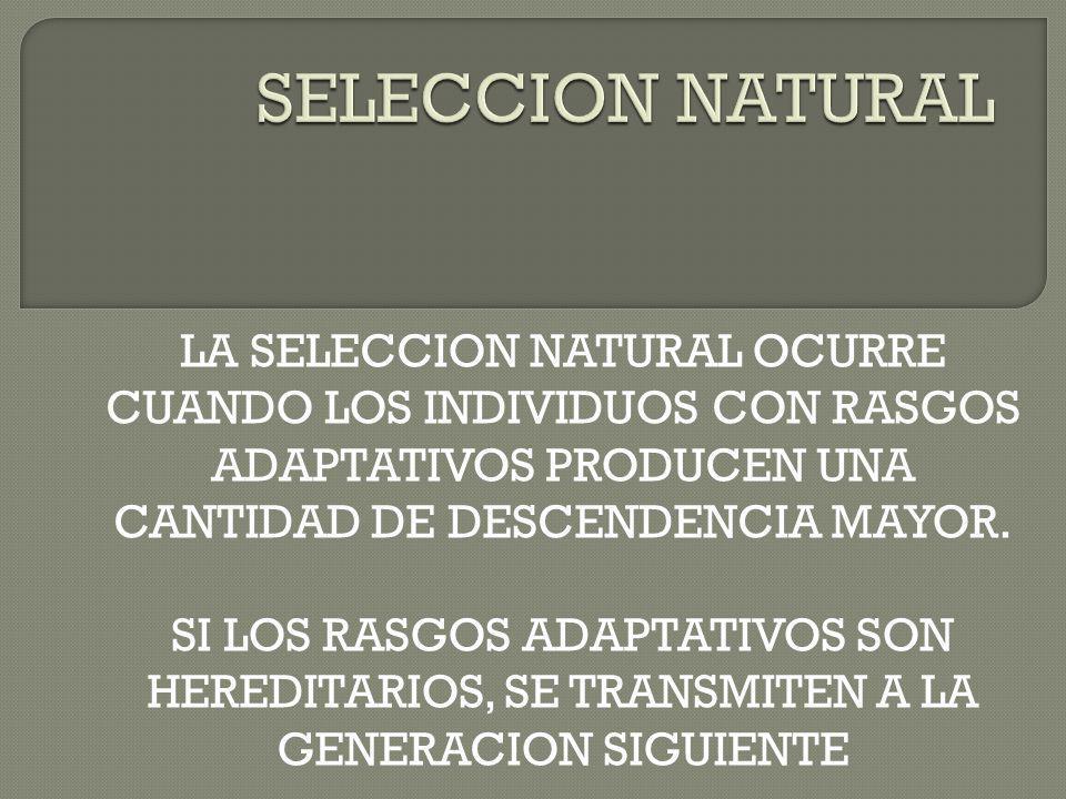 SELECCION NATURAL LA SELECCION NATURAL OCURRE CUANDO LOS INDIVIDUOS CON RASGOS ADAPTATIVOS PRODUCEN UNA CANTIDAD DE DESCENDENCIA MAYOR.