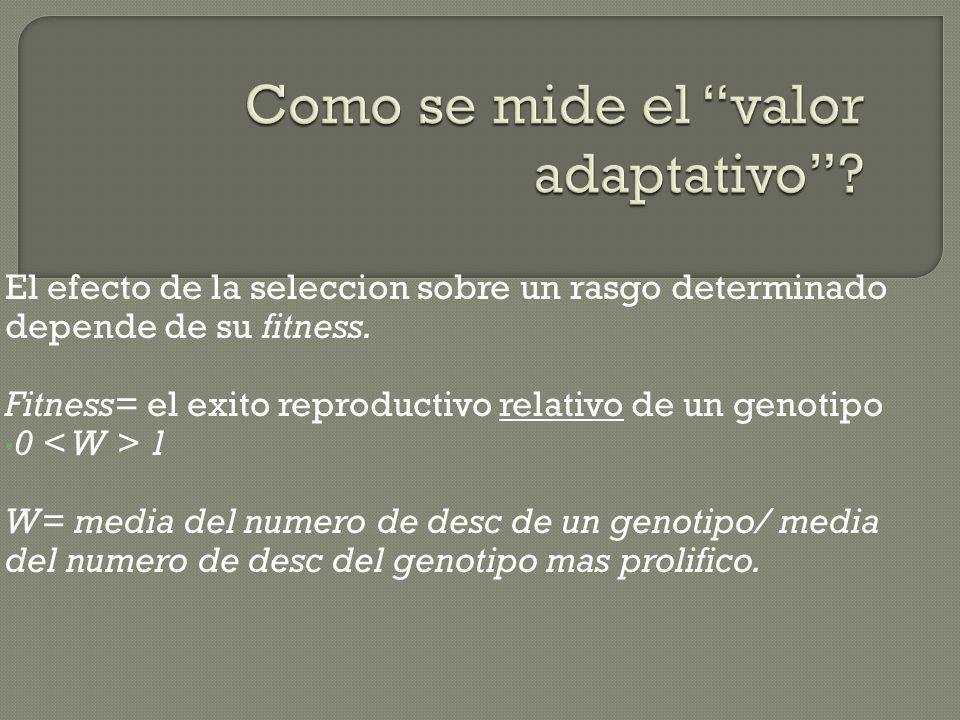 Como se mide el valor adaptativo