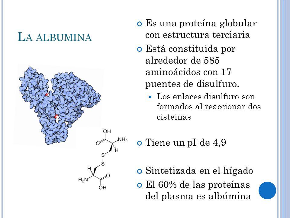 La albumina Es una proteína globular con estructura terciaria