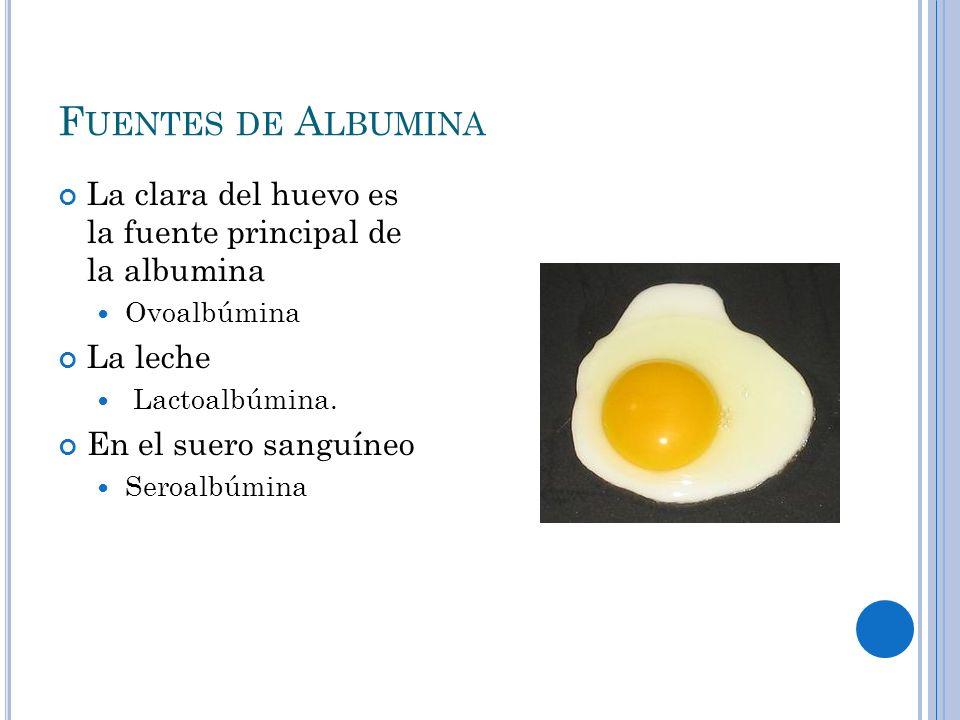 Fuentes de Albumina La clara del huevo es la fuente principal de la albumina. Ovoalbúmina. La leche.