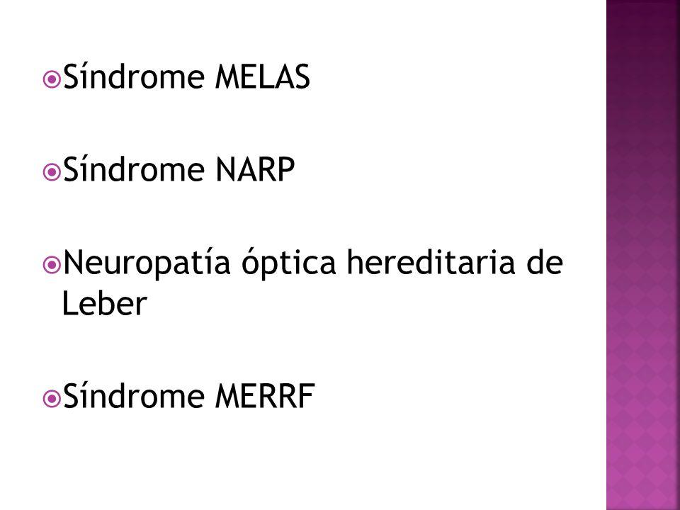 Síndrome MELAS Síndrome NARP Neuropatía óptica hereditaria de Leber Síndrome MERRF