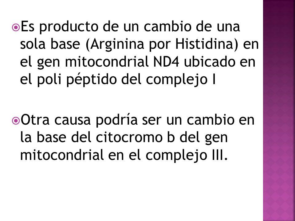 Es producto de un cambio de una sola base (Arginina por Histidina) en el gen mitocondrial ND4 ubicado en el poli péptido del complejo I