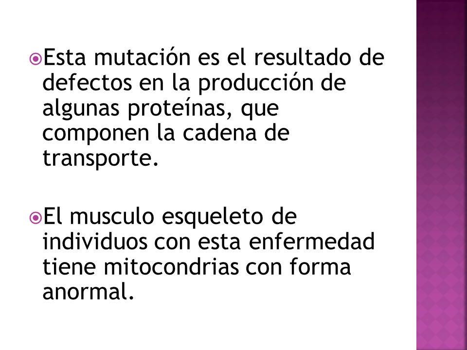 Esta mutación es el resultado de defectos en la producción de algunas proteínas, que componen la cadena de transporte.
