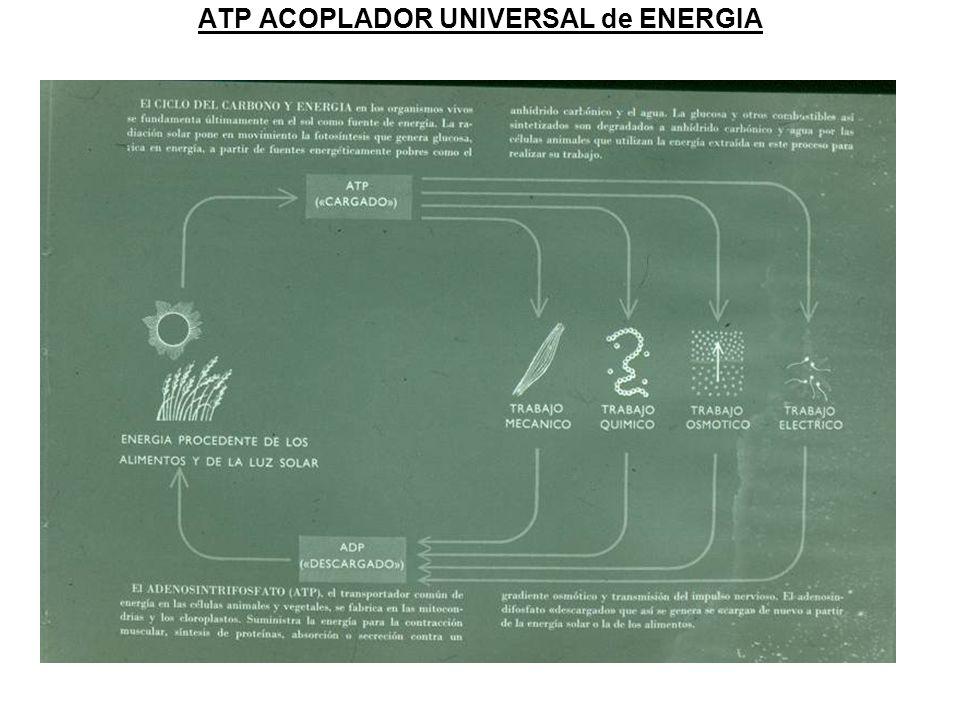 ATP ACOPLADOR UNIVERSAL de ENERGIA
