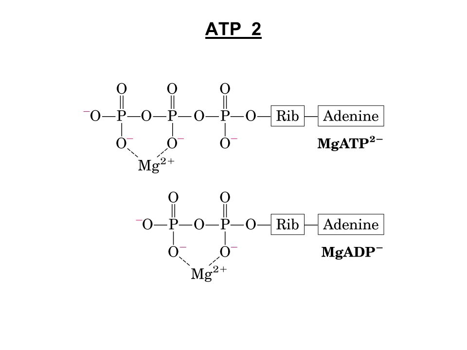 ATP 2