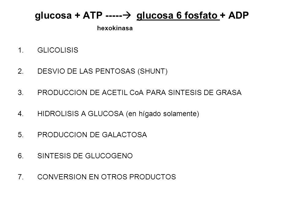 glucosa + ATP ----- glucosa 6 fosfato + ADP hexokinasa