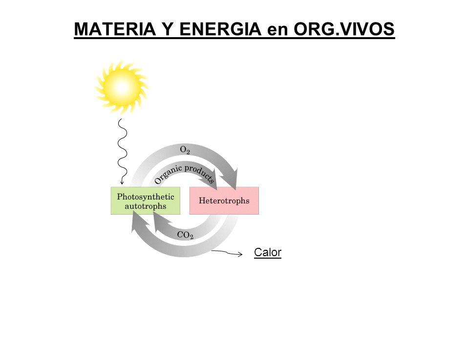 MATERIA Y ENERGIA en ORG.VIVOS