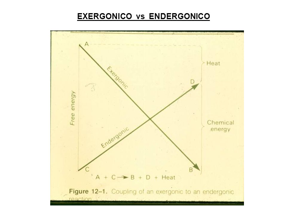 EXERGONICO vs ENDERGONICO