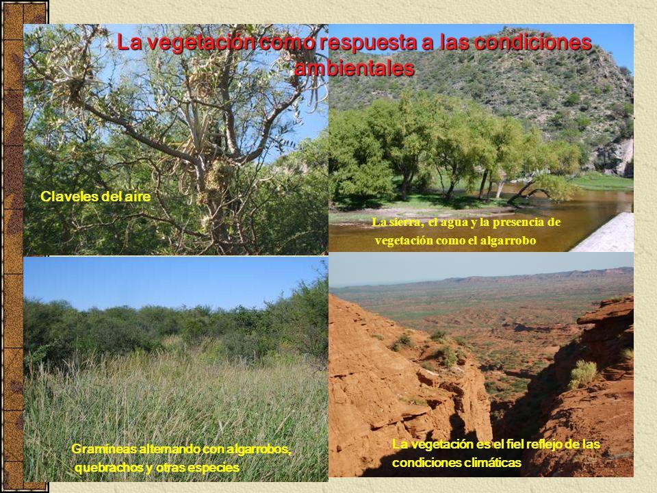 La vegetación como respuesta a las condiciones ambientales
