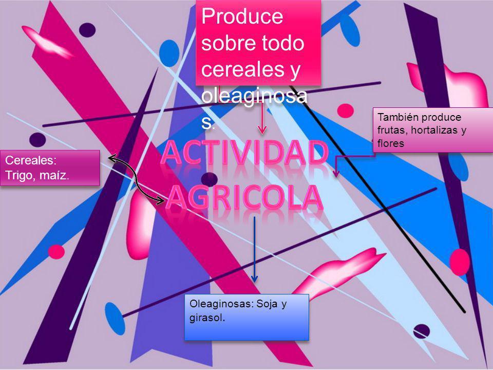 ACTIVIDAD AGRICOLA Produce sobre todo cereales y oleaginosas.