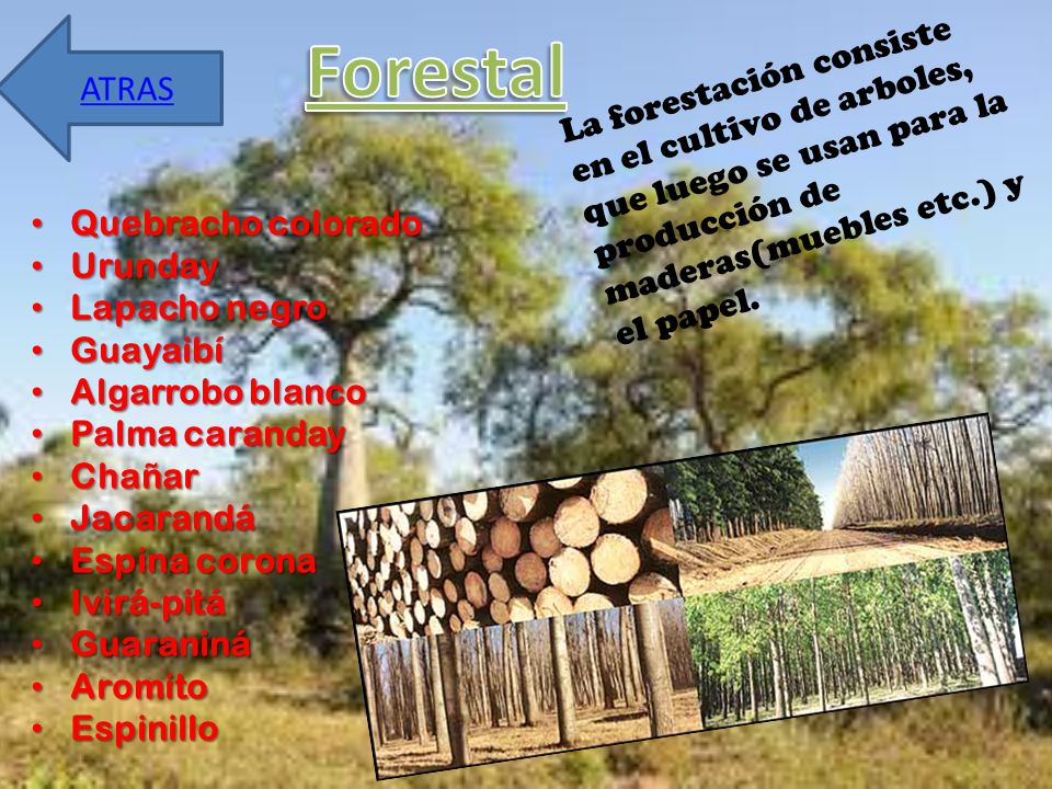 Forestal La forestación consiste en el cultivo de arboles, que luego se usan para la producción de maderas(muebles etc.) y el papel.