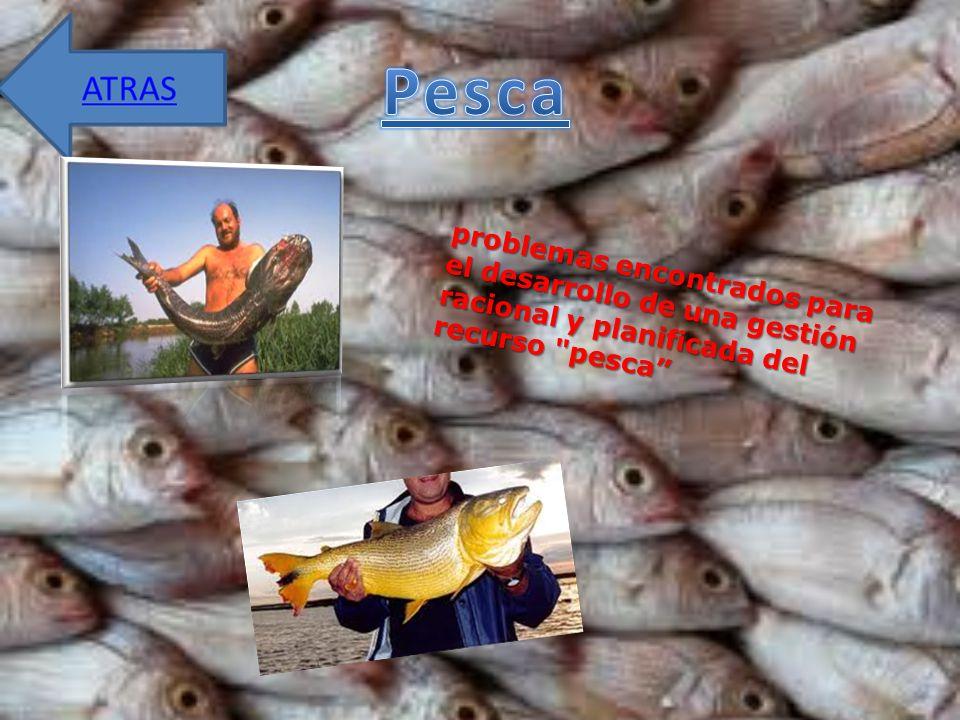 Pesca problemas encontrados para el desarrollo de una gestión racional y planificada del recurso pesca