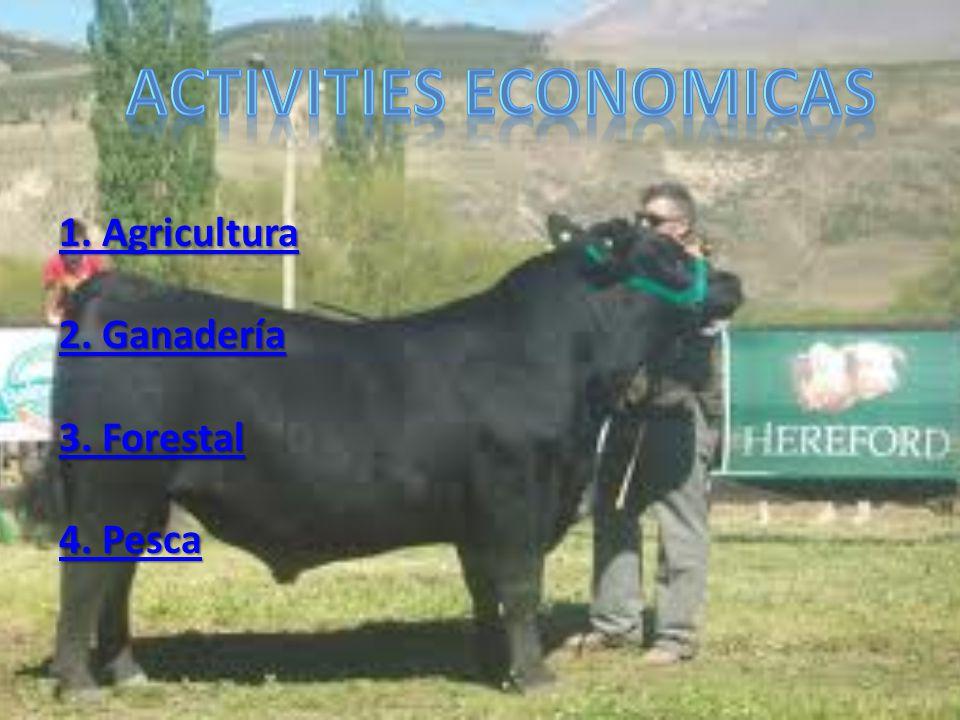 Activities economicas