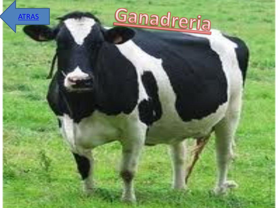 Ganadreria
