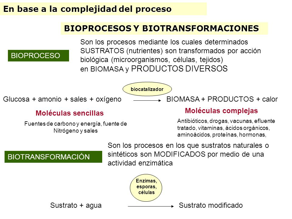 Enzimas, esporas, células