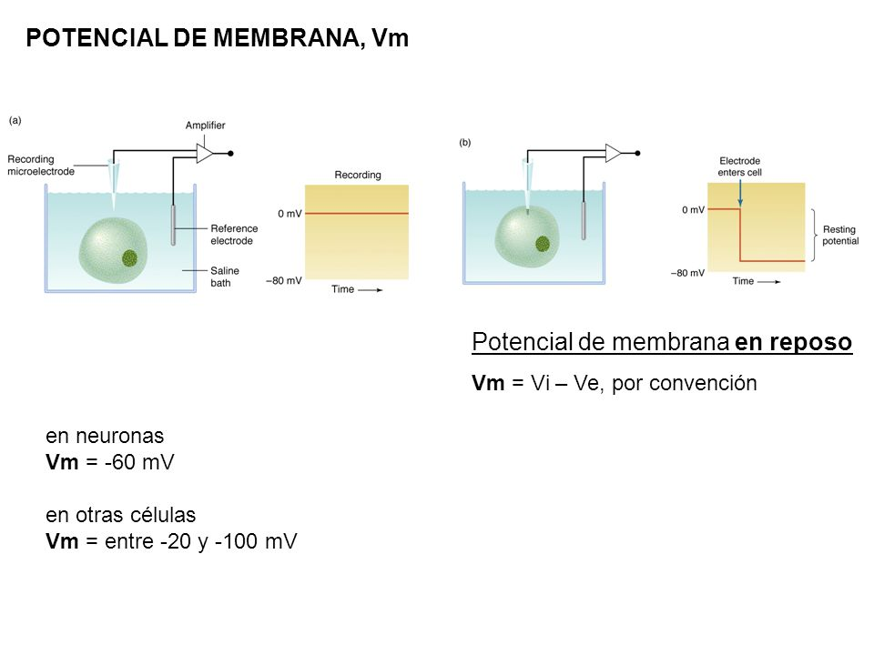 POTENCIAL DE MEMBRANA, Vm