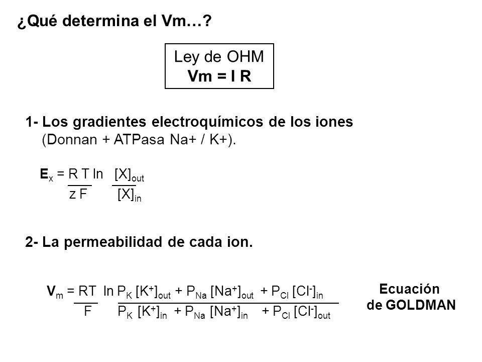 ¿Qué determina el Vm… Ley de OHM Vm = I R