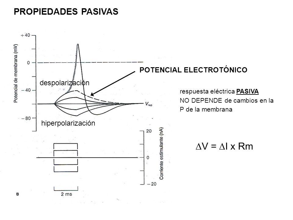 DV = DI x Rm PROPIEDADES PASIVAS POTENCIAL ELECTROTÓNICO