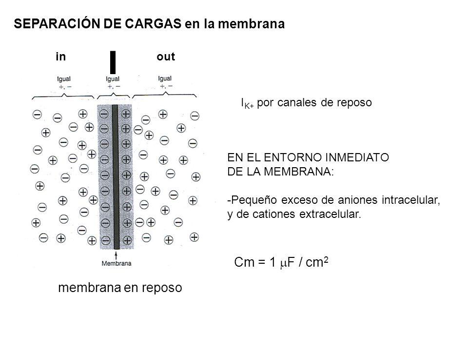 SEPARACIÓN DE CARGAS en la membrana