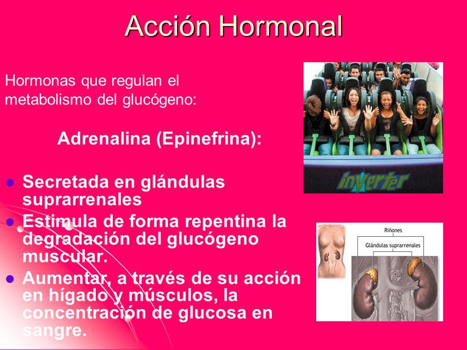 Adrenalina (Epinefrina):