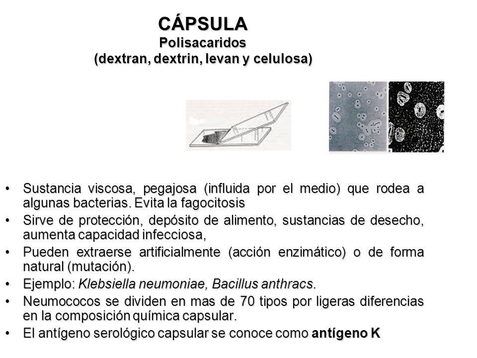 CÁPSULA Polisacaridos (dextran, dextrin, levan y celulosa)