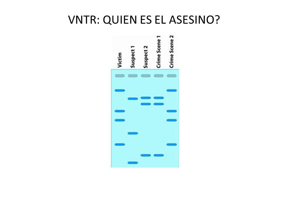 VNTR: QUIEN ES EL ASESINO