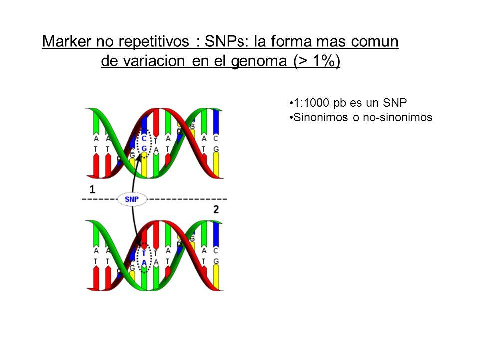 Marker no repetitivos : SNPs: la forma mas comun de variacion en el genoma (> 1%)