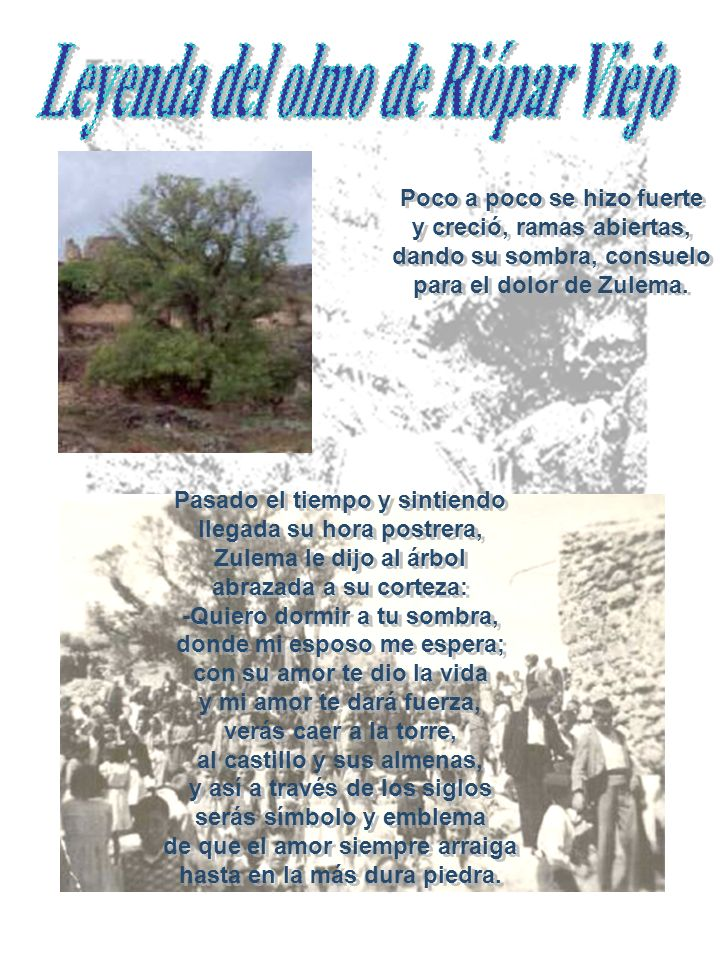 Leyenda del olmo de Riópar Viejo hasta en la más dura piedra.