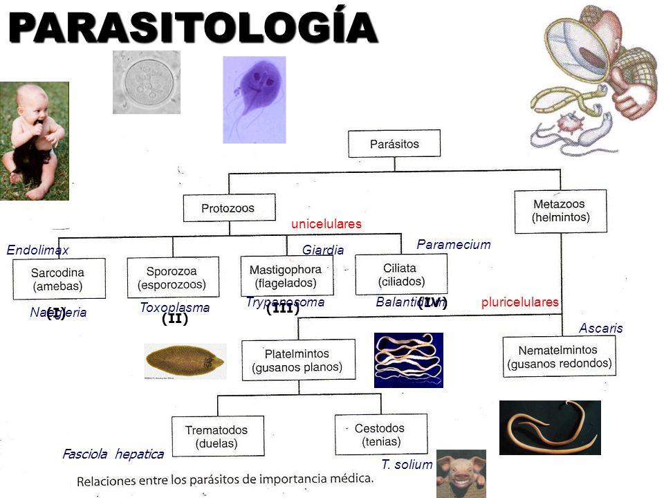 PARASITOLOGÍA unicelulares Paramecium Endolimax Giardia Trypanosoma