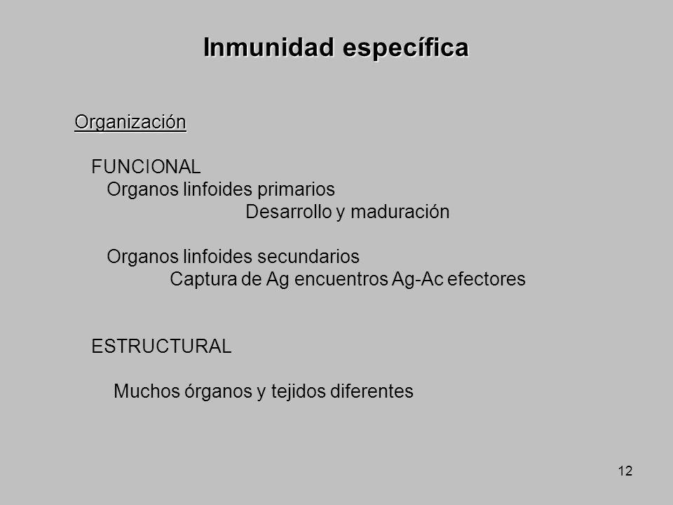 Inmunidad específica Organización FUNCIONAL