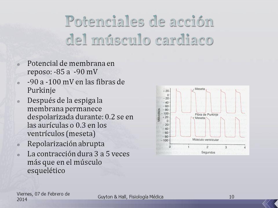 Potenciales de acción del músculo cardiaco
