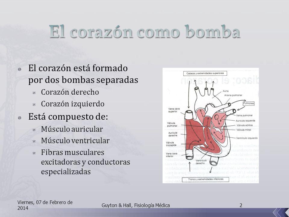 El corazón como bomba El corazón está formado por dos bombas separadas