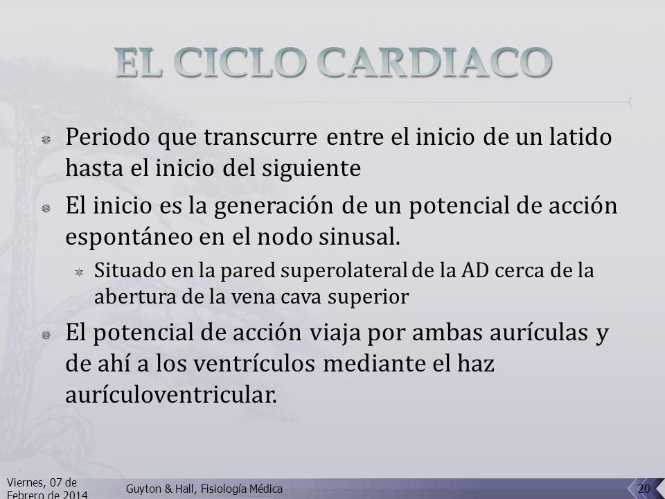EL CICLO CARDIACO Periodo que transcurre entre el inicio de un latido hasta el inicio del siguiente.