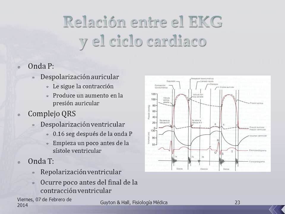 Relación entre el EKG y el ciclo cardiaco