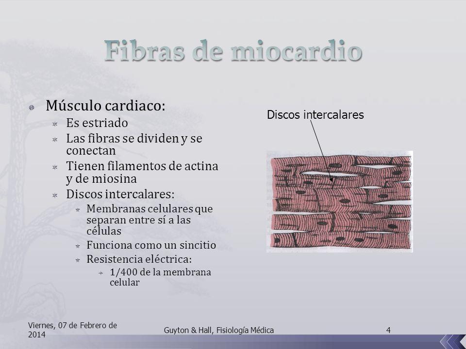 Fibras de miocardio Músculo cardiaco: Es estriado