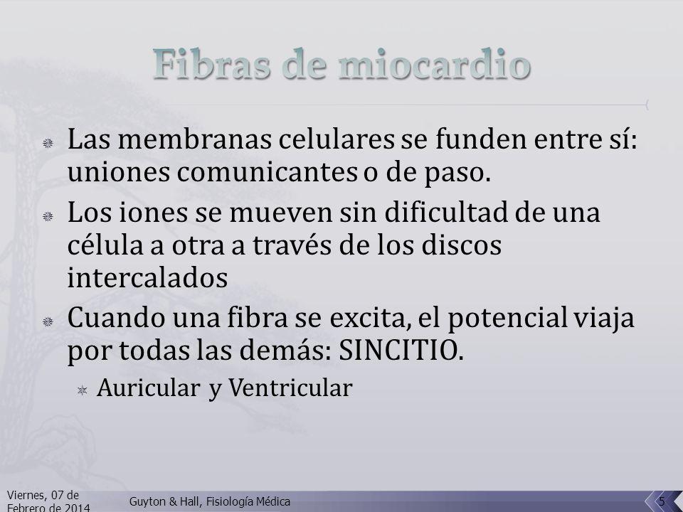 Fibras de miocardio Las membranas celulares se funden entre sí: uniones comunicantes o de paso.