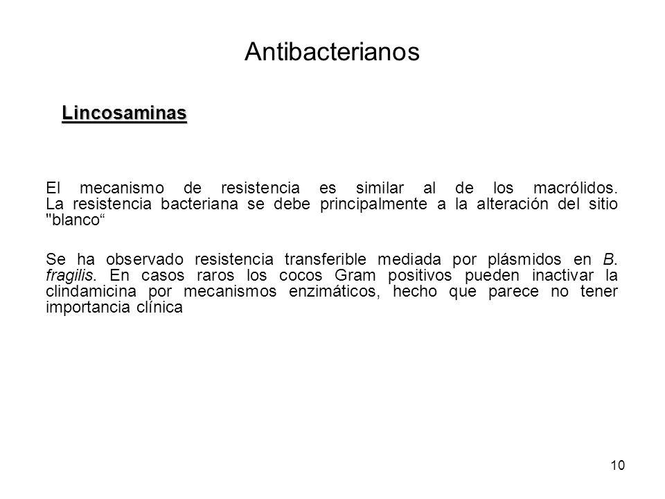 Antibacterianos Lincosaminas