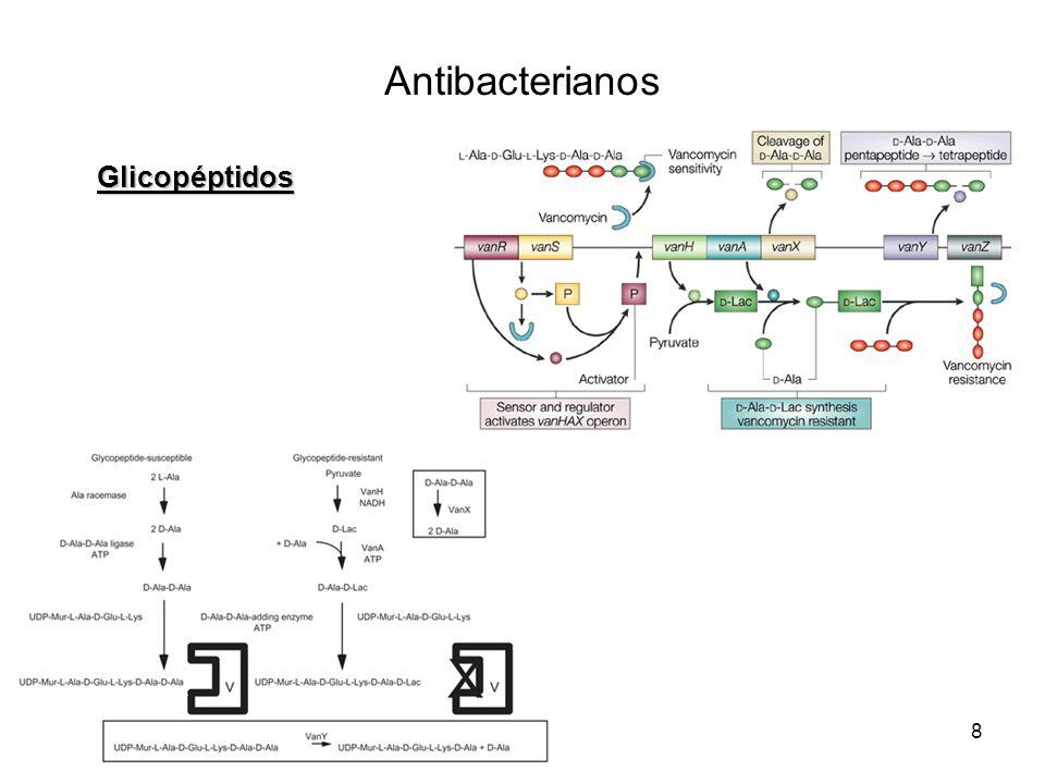 Antibacterianos Glicopéptidos