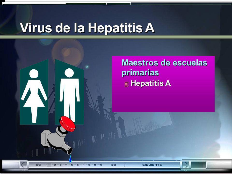 Virus de la Hepatitis A Maestros de escuelas primarias Hepatitis A